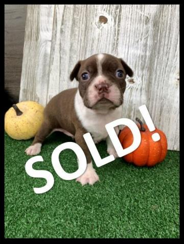 Petey SOLD!