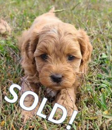 Clifford SOLD!