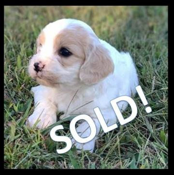 Wilber SOLD!