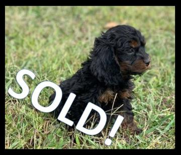 Piddle SOLD!